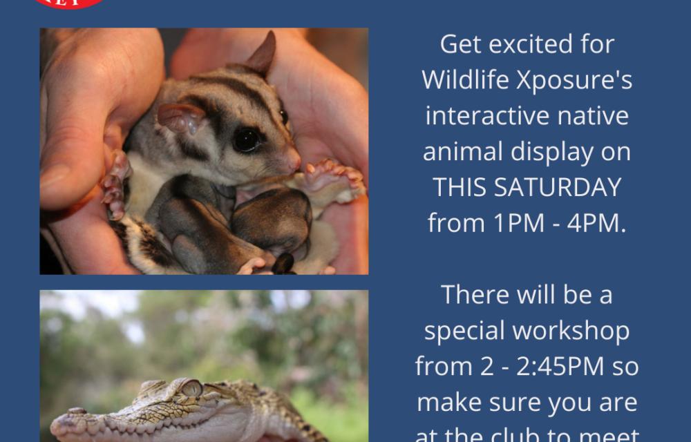 NAIDOC WEEK @ FHC – Native Animal Display